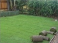 Lawn completed with some left over turf rolls